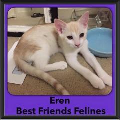 2016-Adopted-Eren