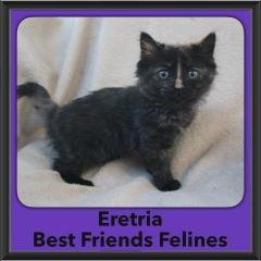 2016-Adopted-Eretria