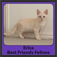 2016-Adopted-Erica