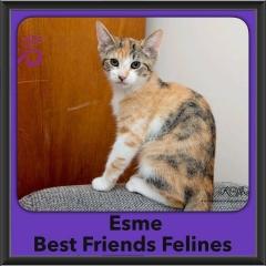 2016-Adopted-Esme