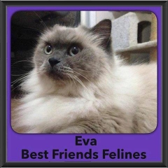 2016-Adopted-Eva