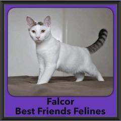 2016-Adopted-Falcor