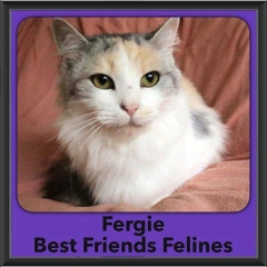 2016-Adopted-Fergie