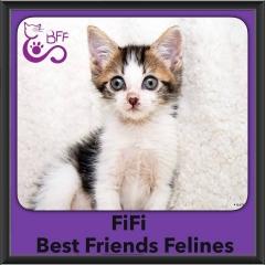 2016-Adopted-Fifi