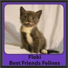 2016-Adopted-Floki