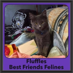 2016-Adopted-Fluffles