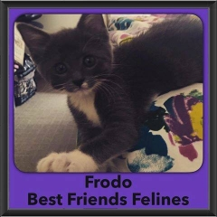 2016-Adopted-Frodo