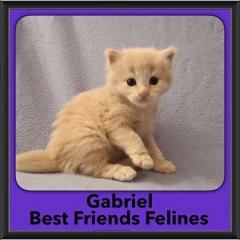 2016-Adopted-Gabriel