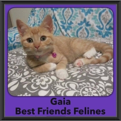 2016-Adopted-Gaia