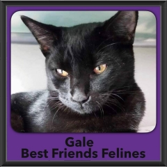 2016-Adopted-Gale