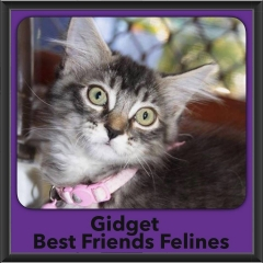 2016-Adopted-Gidget