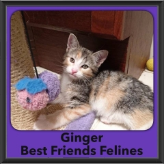 2016-Adopted-Ginger