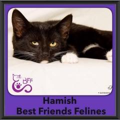 2016-Adopted-Hamish