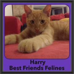 2016-Adopted-Harry-2