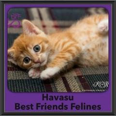 2016-Adopted-Havasu