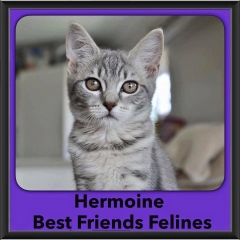 2016-Adopted-Hermoine