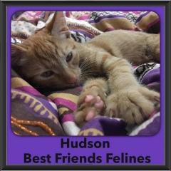 2016-Adopted-Hudson