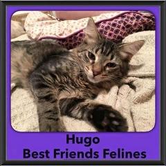 2016-Adopted-Hugo
