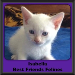 2016-Adopted-Isabella