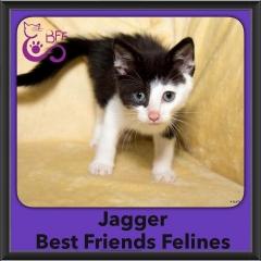 2016-Adopted-Jagger