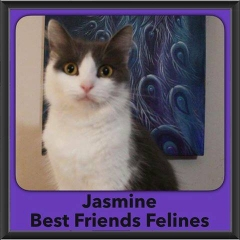 2016-Adopted-Jasmine