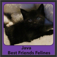 2016-Adopted-Java