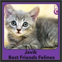 2016-Adopted-Javik