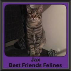 2016-Adopted-Jax