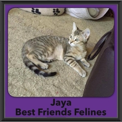 2016-Adopted-Jaya