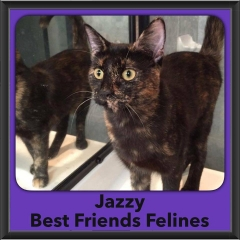 2016-Adopted-Jazzy