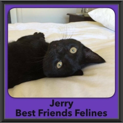 2016-Adopted-Jerry