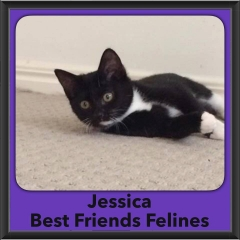 2016-Adopted-Jessica