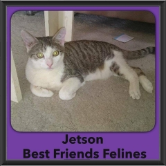 2016-Adopted-Jetson