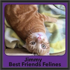 2016-Adopted-Jimmy