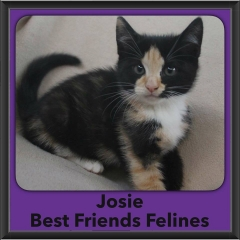 2016-Adopted-Josie
