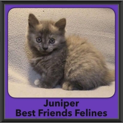 2016-Adopted-Juniper-2