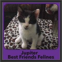 2016-Adopted-Juniper