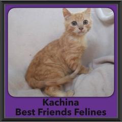2016-Adopted-Kachina