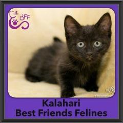 2016-Adopted-Kalahari