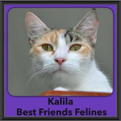 2016-Adopted-Kalila