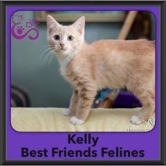 2016-Adopted-Kelly