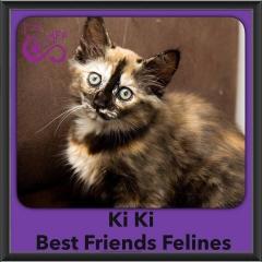 2016-Adopted-Ki-Ki