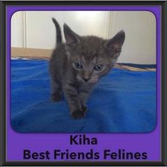 2016-Adopted-Kiha