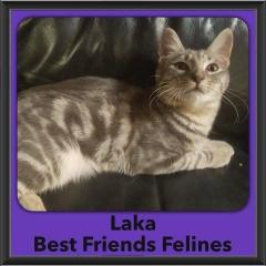 2016-Adopted-Laka