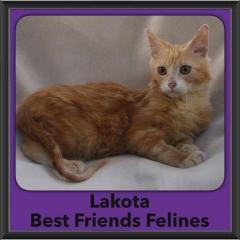 2016-Adopted-Lakota