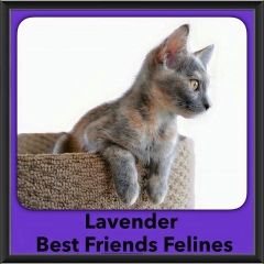 2016-Adopted-Lavender