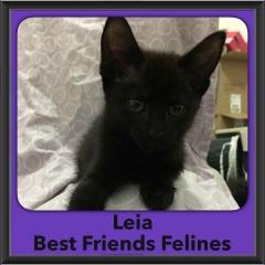 2016-Adopted-Leia