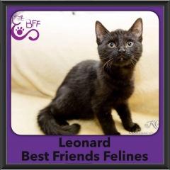2016-Adopted-Leonard