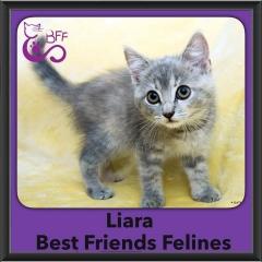 2016-Adopted-Liara