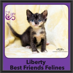 2016-Adopted-Liberty